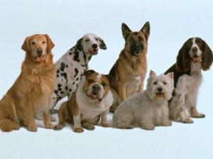 Домашние животные, собаки