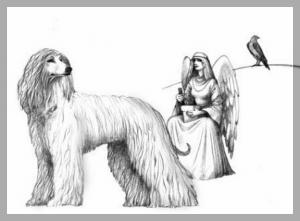 афганская борзая рисунок