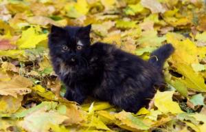 Пушистик ищет дом - котенок в добрые руки
