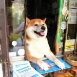 Сузуки - самый обаятельный продавец