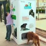 автомат для кормления бродячих животных в Стамбуле