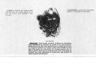 иллюстрация правильной мочки носа английского кокера