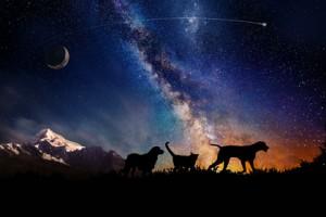 космос животные