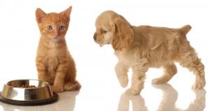 котенок и щенок с кормом