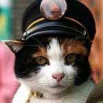 кот-машинист
