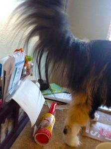 кошка с самой длинной шерстью занесена в книгу рекордов гиннеса