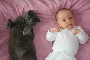 малыш и кошка лежат