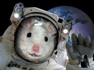 мышка-космонавт прощается