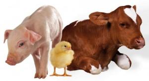 сельхоз животные