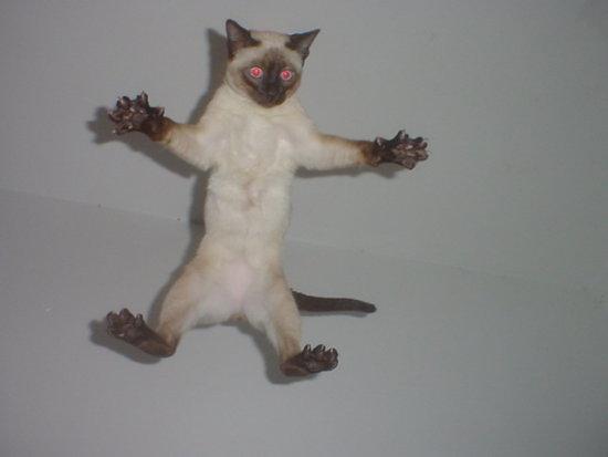 сиамский кот в полете