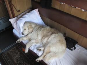 собака едет в поезде спит в купе