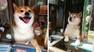 собака-продавец