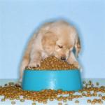 щенок и много корма