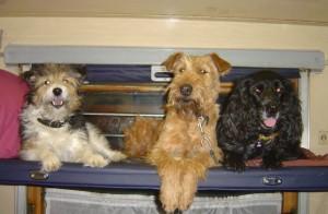 собаки в плацкарте