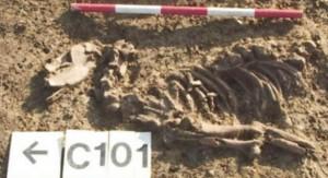 ископаемые останки собаки
