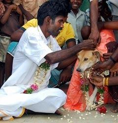 индиец женился на собаке