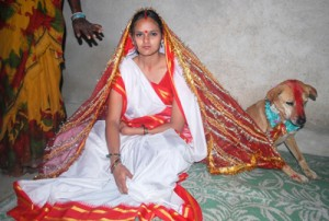 свадьба пес индия