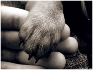 всемирный день защиты животных
