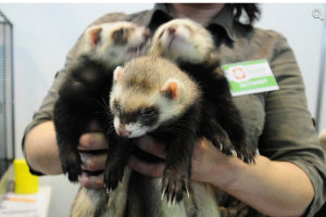 красноярская выставка зоомир