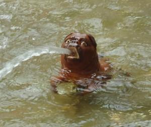 мопс фаворитка фонтан в петергофе