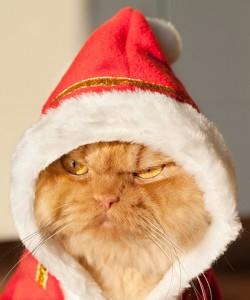 """Сердитый турецкий кот в нетерпении ждет красноярский """"Зоомир"""""""