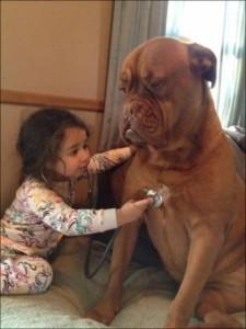 бордоский дог и ребенок