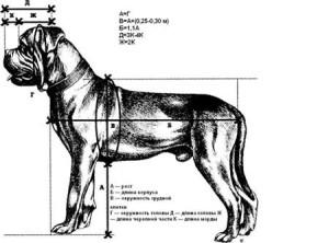 бордоский дог стандарт породы