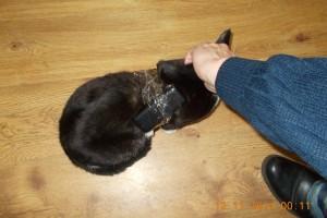кошка с мобильниками колония ухты