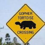 переход lzk черепах