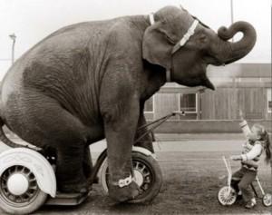 слон на велосипеде