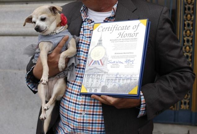 собака стала мером