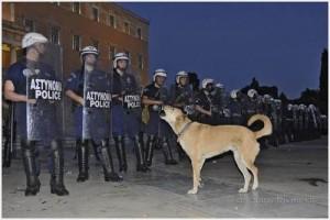 протестующий пес сосиска