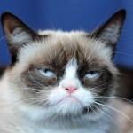 сердитая кошка2