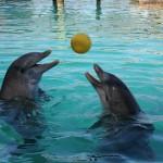 дельфинов пытались вывезти из крыма нелегально
