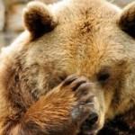 машинисты сбили медведя в норильске
