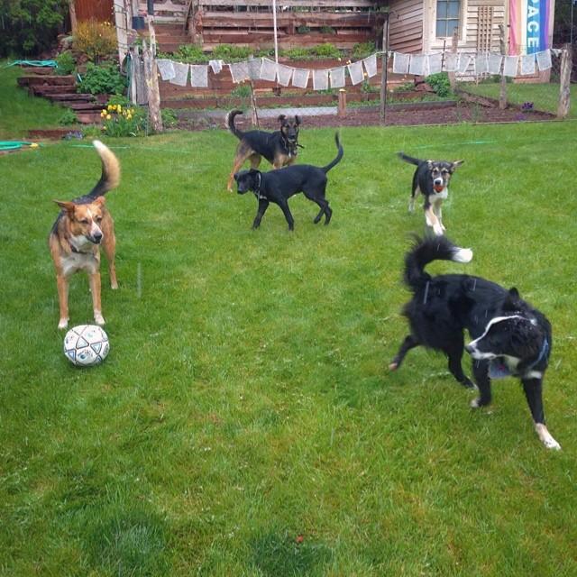 собаки гаса кенуотри