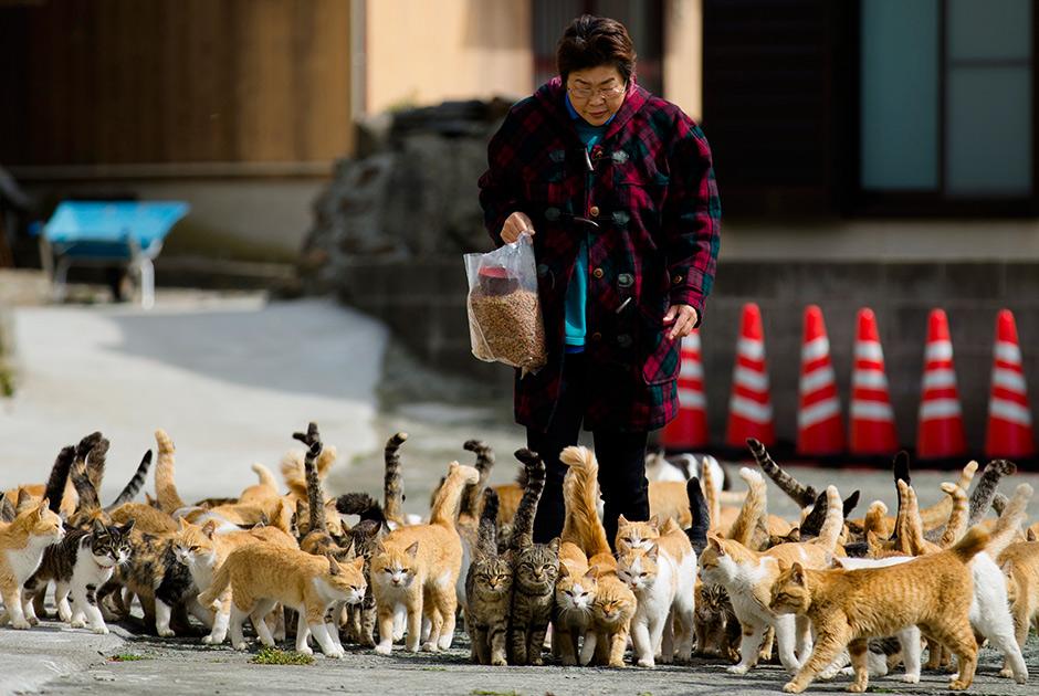 аошима кошки 2