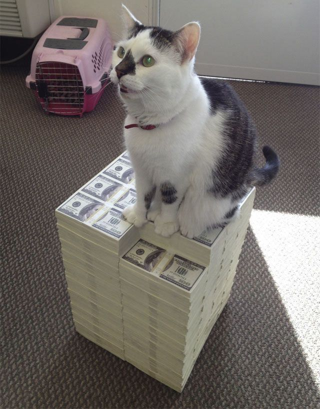 кот на пачках с долларами