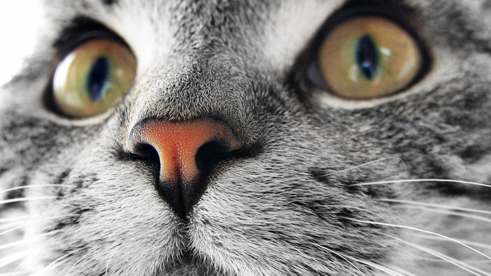 кошачья мордочка крупно