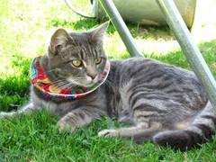 кошка в воротничке birdsbesafe