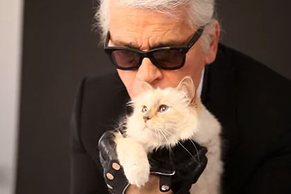 Дохід кішки Карла Лагерфельда — 3 мільйони євро в рік - цікаве про тварин
