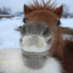 морда коня