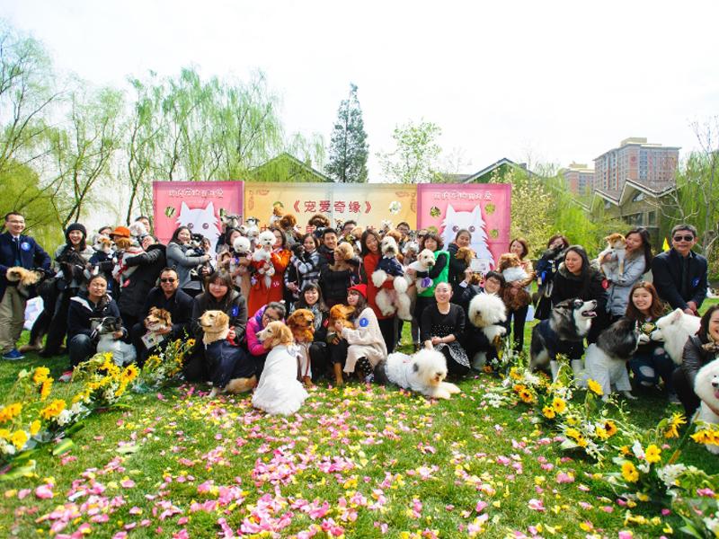 собачья свадьба в Пекине
