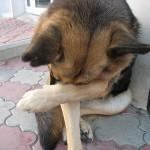собаке стыдно