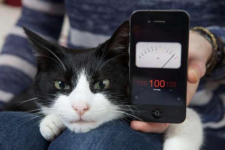 самый громкий кот Мерлин