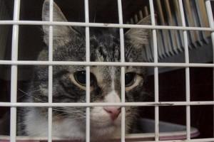 героин у кошки в клетке
