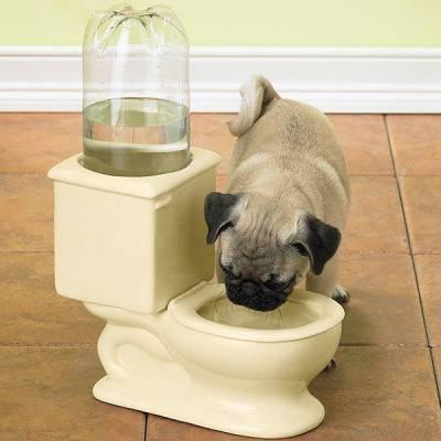 поилка-унитаз для собаки