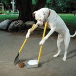 В Иркутске планируют обязать владельцев собак убирать за питомцами