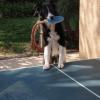 собаки играют в настольный теннис