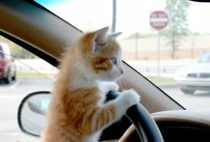 как убрать запах кота из салона авто